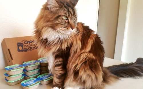 magellan-the-patient-cat