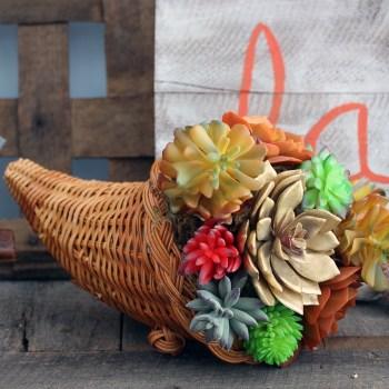 succulent-cornocopia