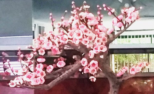 Bonsai-Another-View
