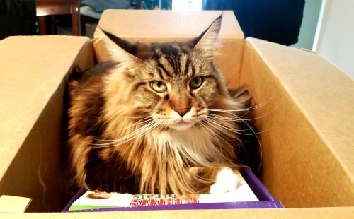 Prized-Kitty-Create-With-Joy.com