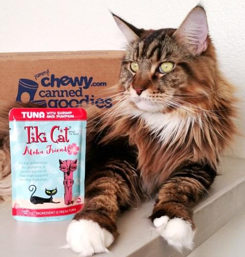 Magellan-Tiki-Cat-Feature-Photo-Square-80