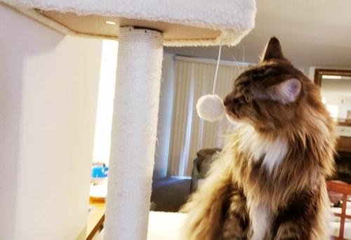 Magellan-Frisco-Cat-Tree-3-Create-With-Joy.com