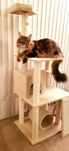 ellan-Frisco-Cat-Tree-L-Create-With-Joy