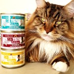 Magellan-Create-With-Joy.com-Weruva-Cats-In-The-Kitchen-1