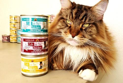 Magellan-Create-With-Joy.com-Weruva-Cats-In-The-Kitchen-1