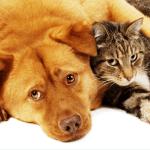 Dog-Cat 1a