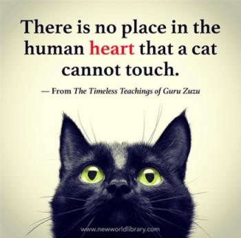 Guru Zuzu - Human Heart