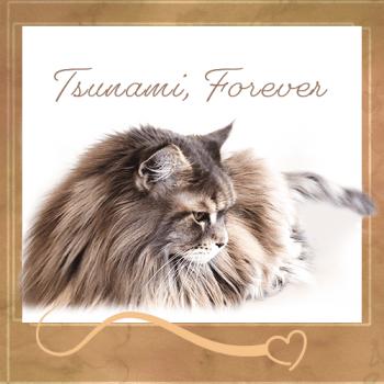 TSUNAMI Forever