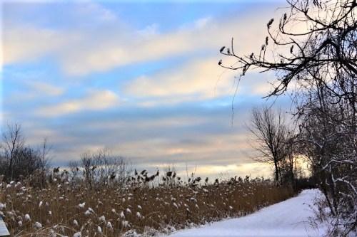 Dixie - Winter Landscape