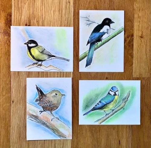 Garden Bird Sketches