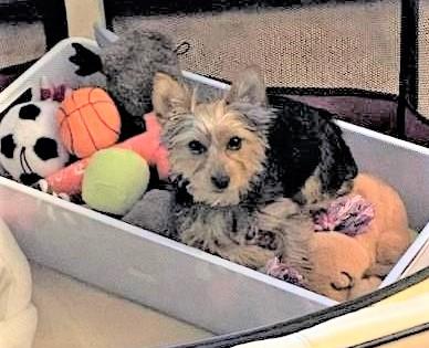 Grand Pup Faye