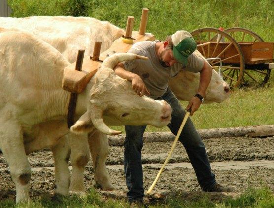 ox-pull