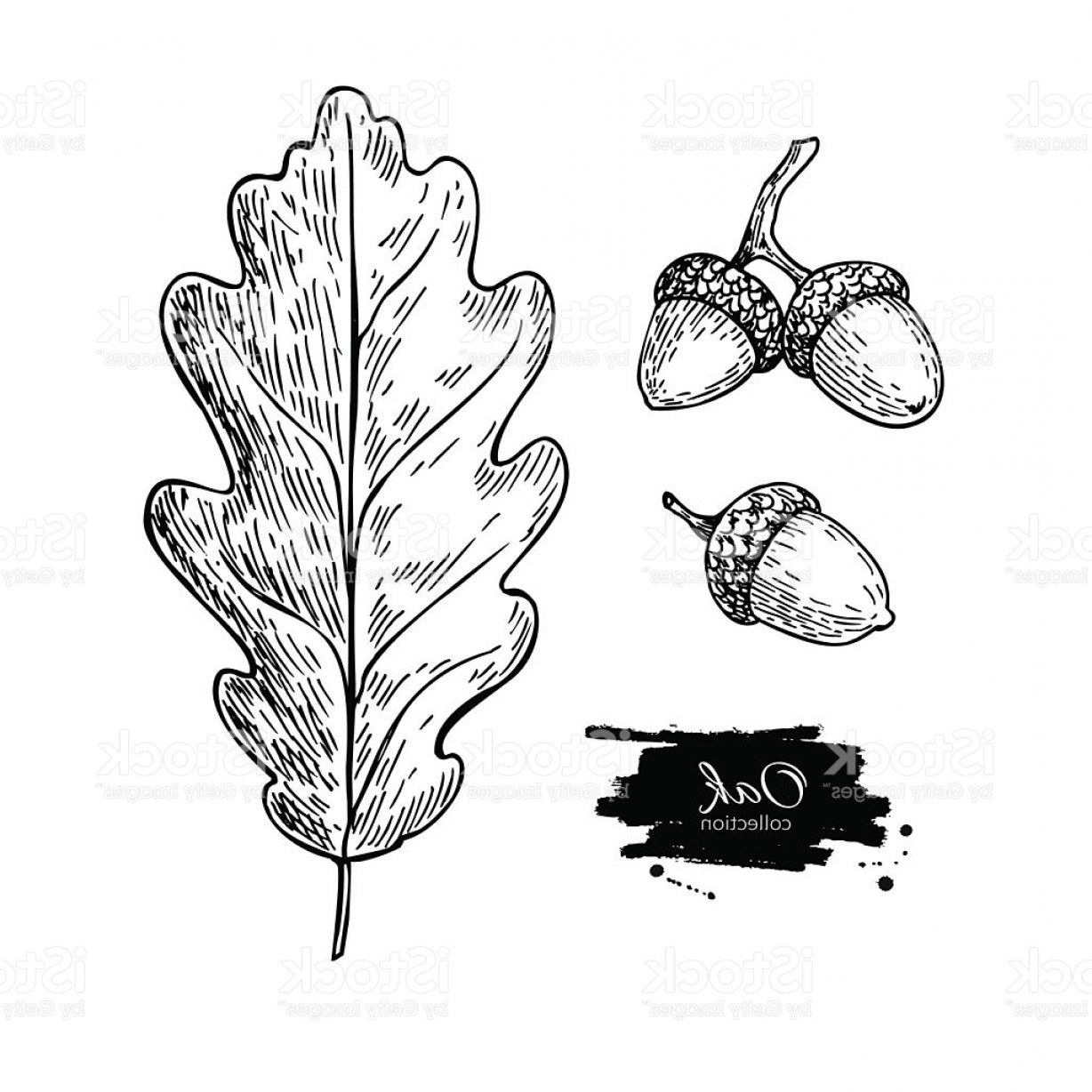 Oak Leaf Vector Clip Art