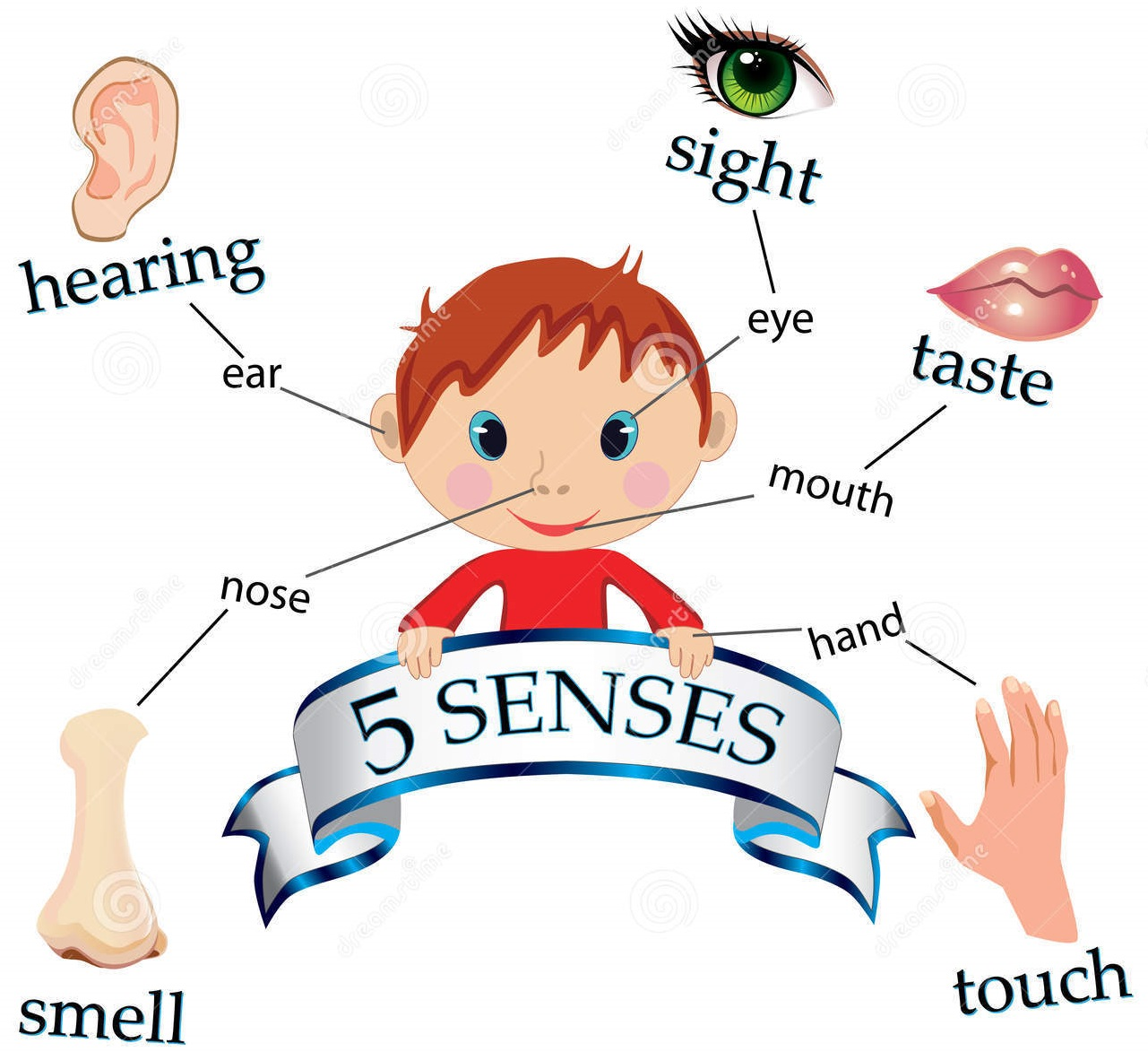 5 Senses Poem Worksheet