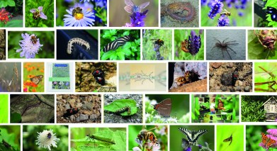 Lezing Insecten sterfte