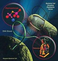 AntibioRes