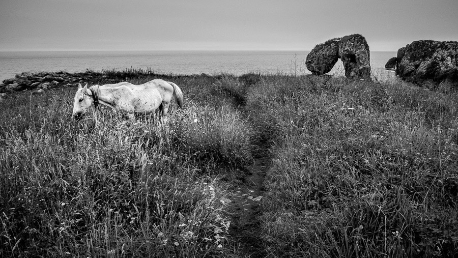 Black and white landscape photo of a horse in Asturias, Spain