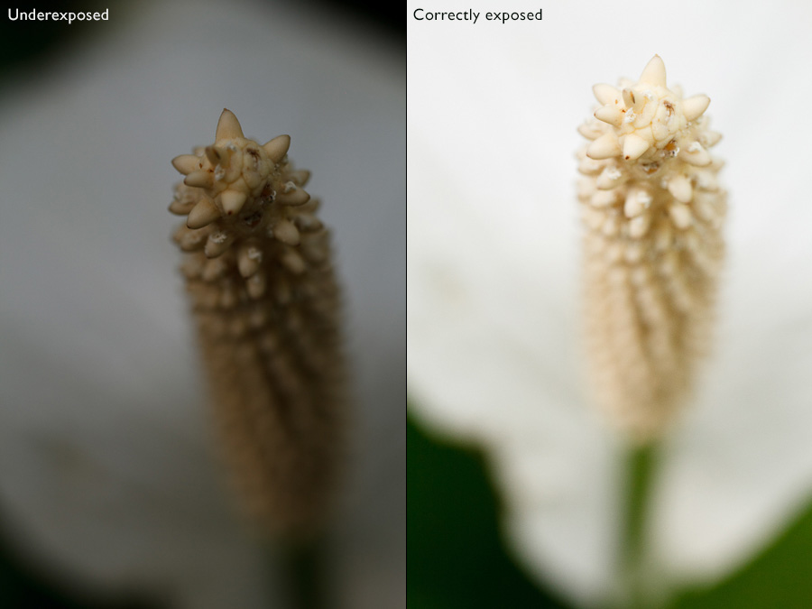 Photos of a white flower showing how cameras get exposure wrong