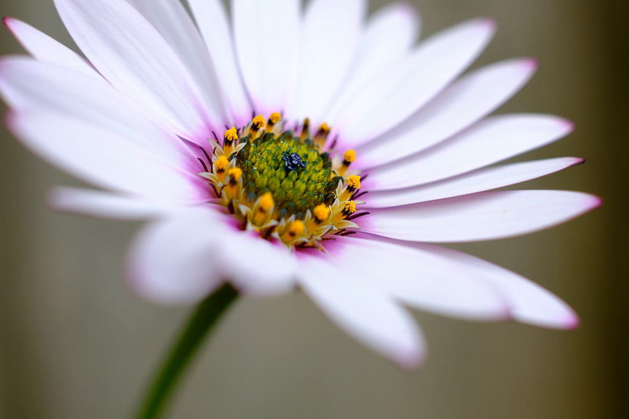 Photo of a white flower made using manual mode