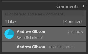 Lightroom Comment panel
