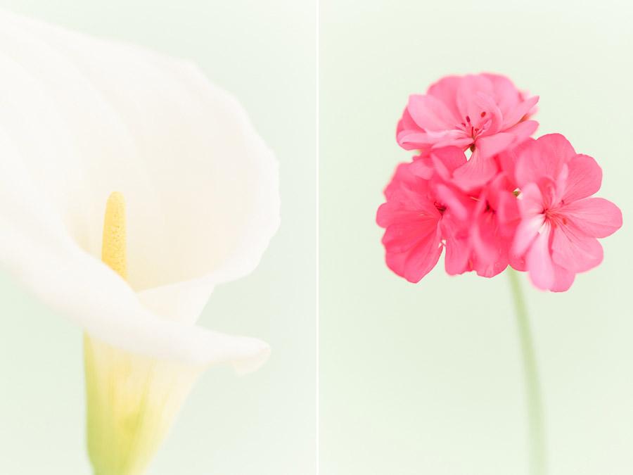 High key flower photos