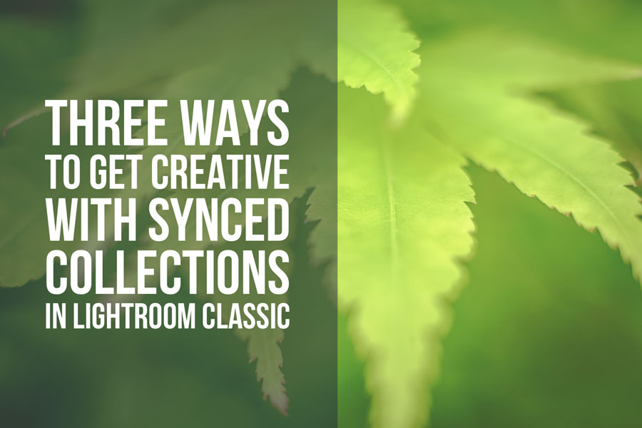 Three Ways To Get Creative With Synced Collections in Lightroom Classic