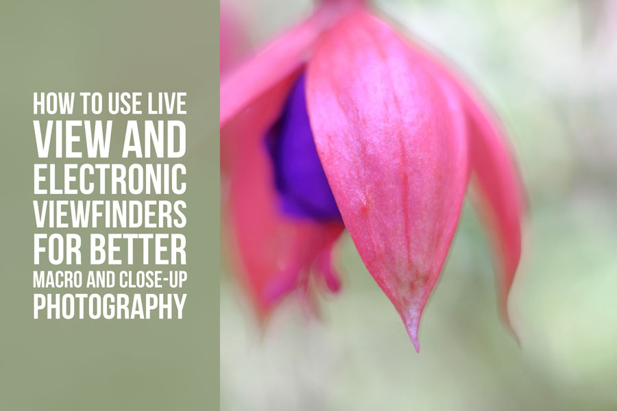 How to Use Live View and Electronic Viewfinders for Better Macro and Close-Up Photography