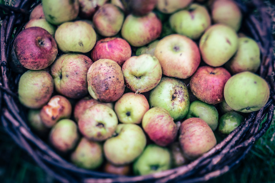 Color graded photo of basket of apples