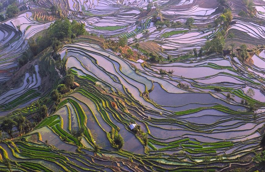 'Yuanyang rice terraces' Bjorn Svensson / Photocrowd.com