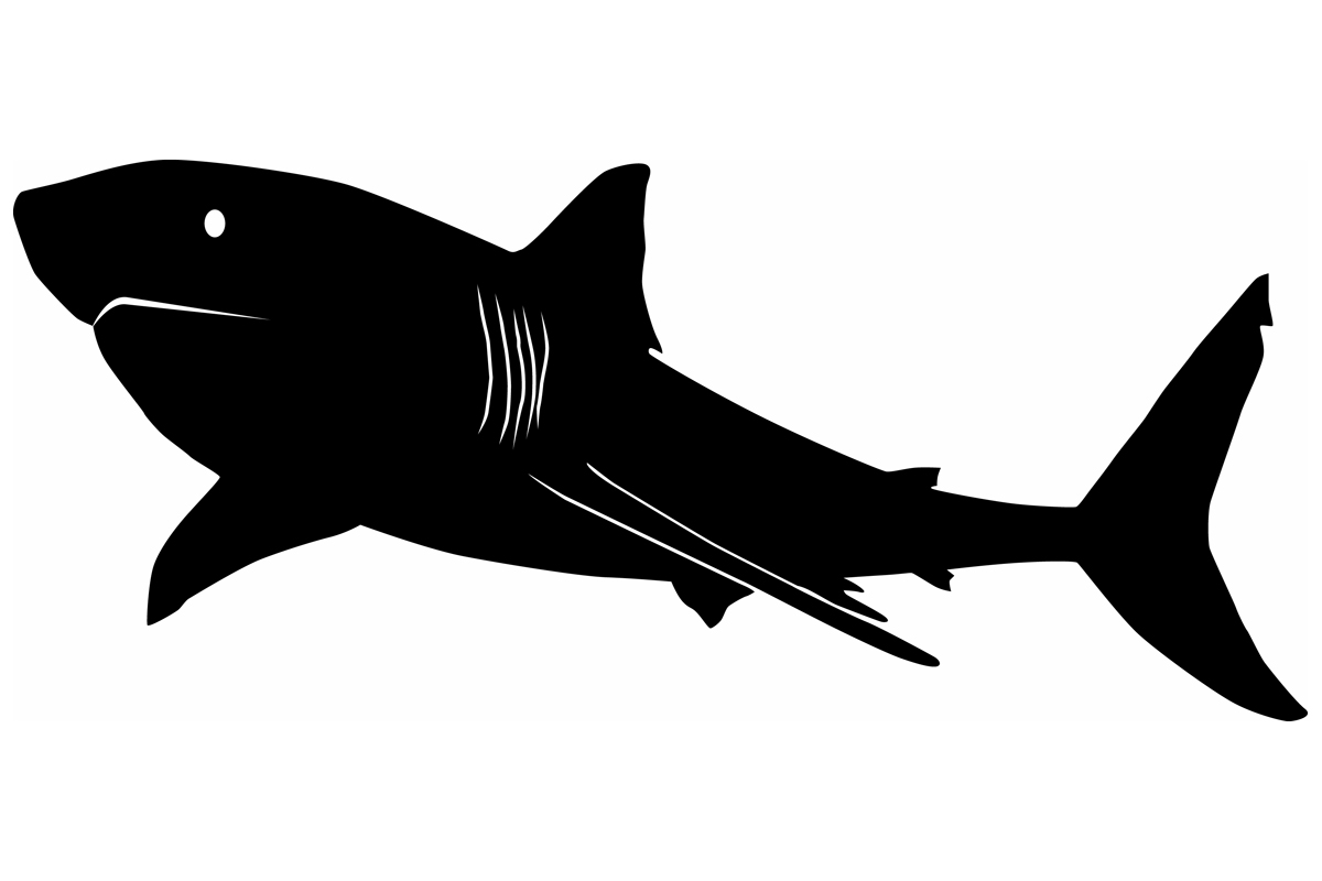 Great White Shark Silhouette Graphic By Idrawsilhouettes