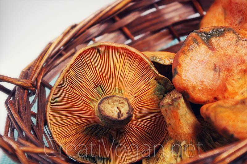 Robellones (rovellons, níscalos, rebollones, Lactarius deliciosus)