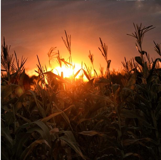 steven-chikosi-sunset