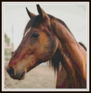 cross-stitch-horse-vsframed