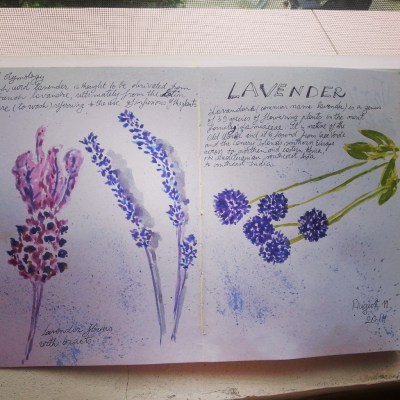 levender watercolor art journal page by Cristina Parus @ creativemag.ro