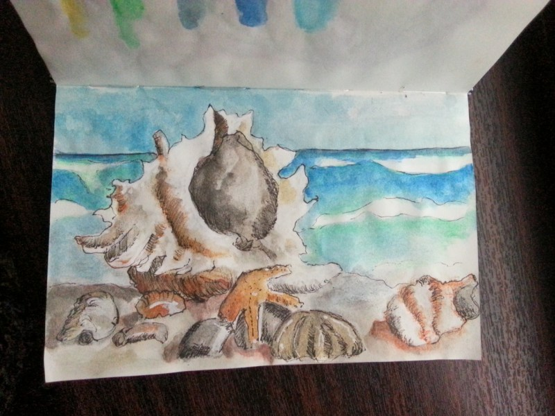 Drawing and painting shells - by Cristina Parus @ creativemag.ro