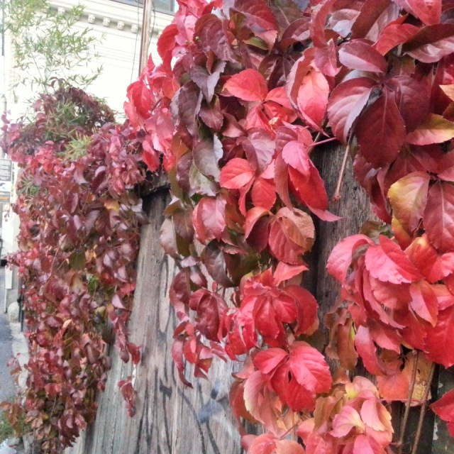 Autumn red leaves by Cristina Parus @ creativemag.ro