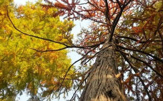 autumn tree by Cristina Parus @ creativemag.ro