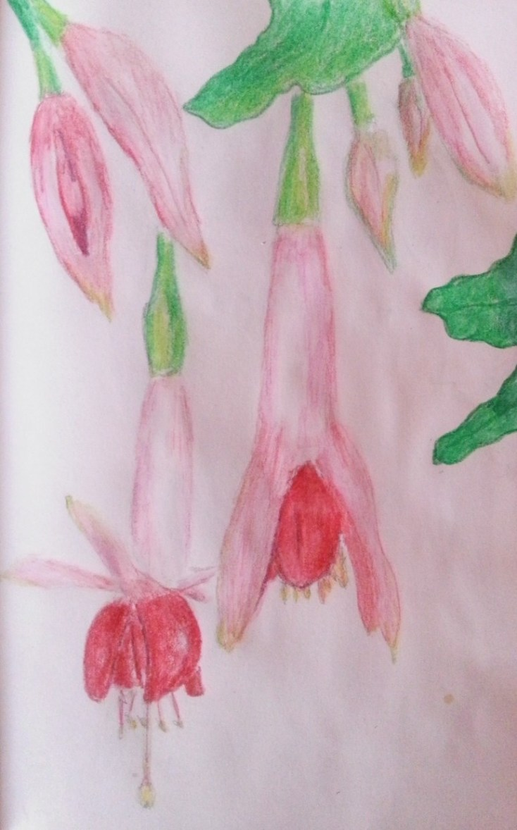 Drawing Fuchsia Flowers in my art journal - by Cristina Parus @ creativemag.ro >>> Mixed Media and Art Journaling
