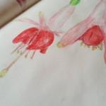 Fuchsia in Bloom