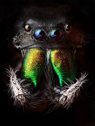 The amazing diversity of Living Creatures