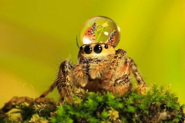 spiderswaterdrops03
