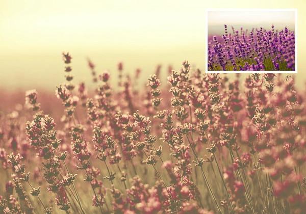 Desert Dust Photoshop Actions