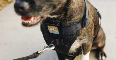 Best Dog Safety Harness Reviews