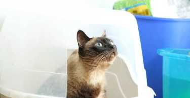 Best Hooded Litter Boxes Reviews