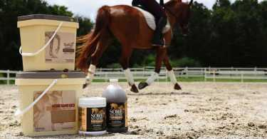 Best Horse Electrolyte Supplements Reviews