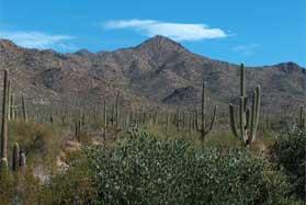 Arizona Saguaro Desert.