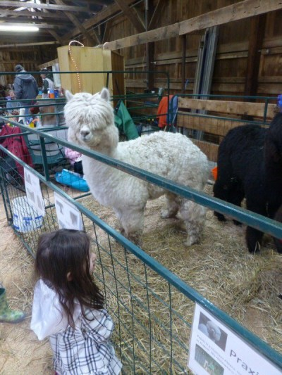 2014 New Hampshire Sheep & Wool Festival: New Goodies