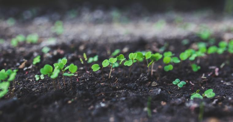 How to Teach Your Child to Love the Bible:  A Book Review of Planting Seeds