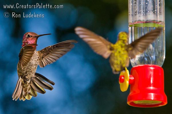 Competing Birds