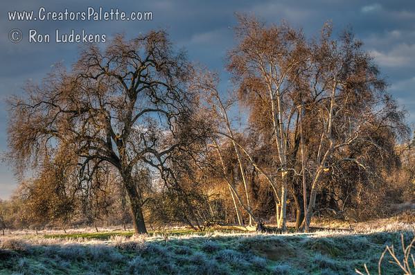 Frosty Trees